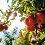 fun fall adventures apple picking